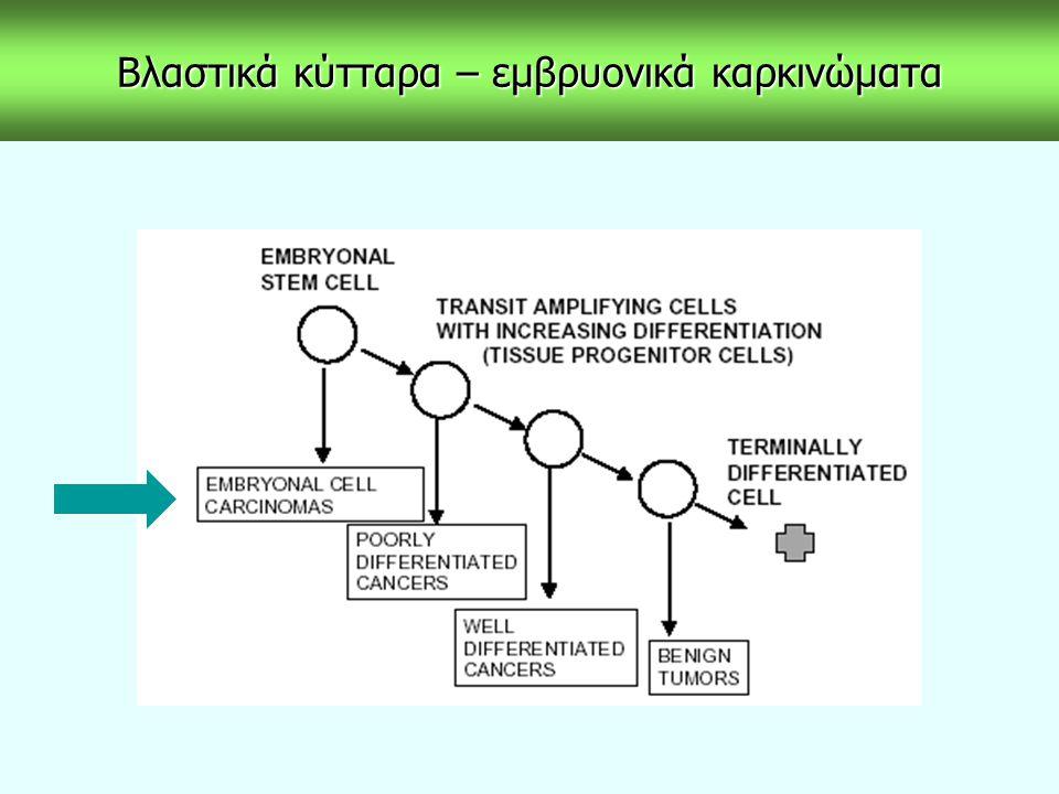 Πολυδύναμες κυτταρικές σειρές - διαφοροποίηση