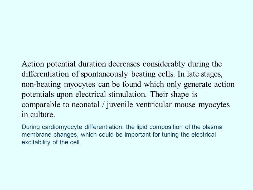 Action potential duration decreases considerably during the differentiation of spontaneously beating cells.