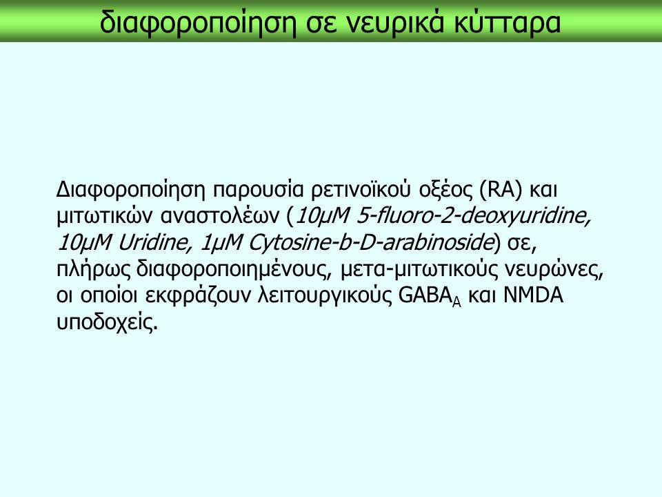διαφοροποίηση σε νευρικά κύτταρα Διαφοροποίηση παρουσία ρετινοϊκού οξέος (RA) και μιτωτικών αναστολέων (10μM 5-fluoro-2-deoxyuridine, 10μM Uridine, 1μ