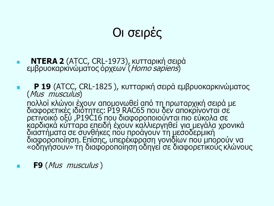 Οι σειρές NTERA 2 (ATCC, CRL-1973), κυτταρική σειρά εμβρυοκαρκινώματος όρχεων (Homo sapiens) Ρ 19 (ATCC, CRL-1825 ), κυτταρική σειρά εμβρυοκαρκινώματο