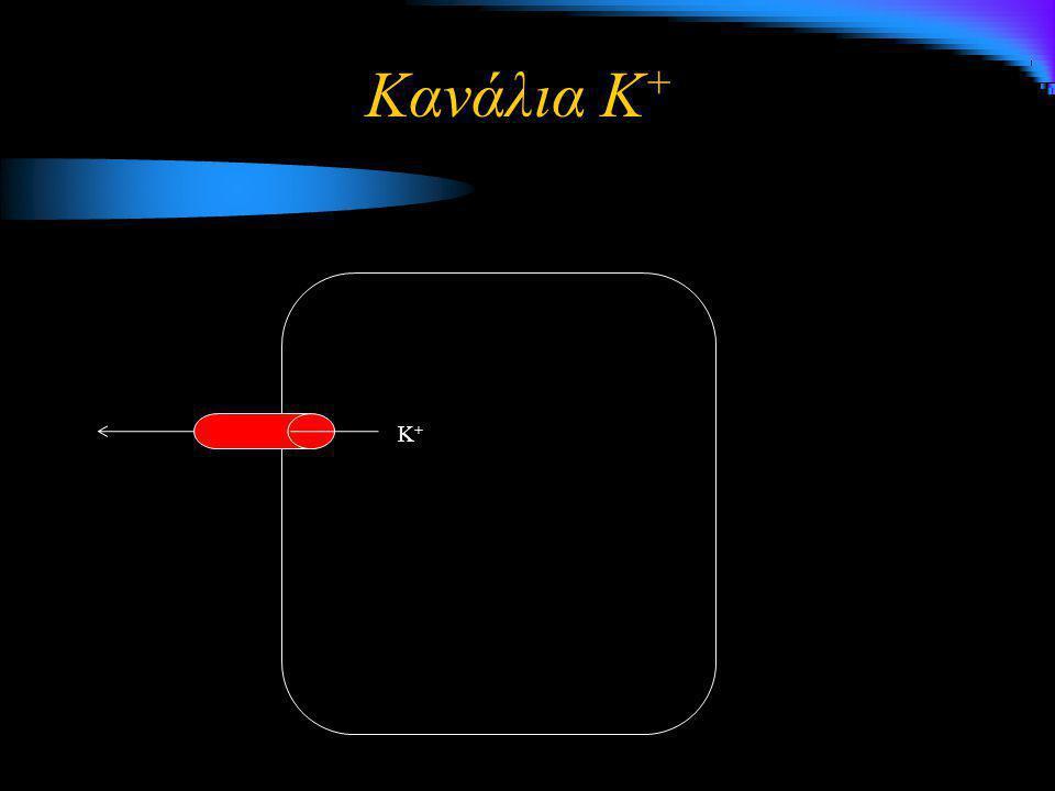 K+K+K+K+ Κανάλια K +