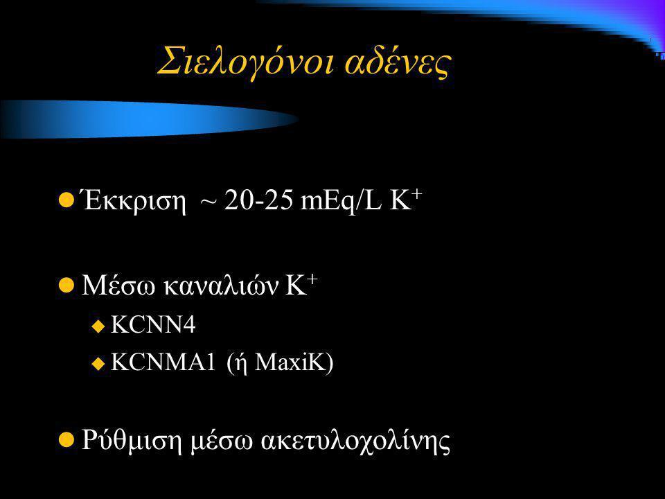Σιελογόνοι αδένες Έκκριση ~ 20-25 mEq/L Κ + Μέσω καναλιών Κ +  KCNN4  KCNMA1 (ή MaxiK) Ρύθμιση μέσω ακετυλοχολίνης