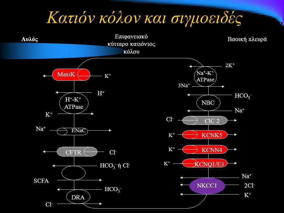 Κατιόν κόλον και σιγμοειδές Βασική πλευρά Επιφανειακό κύτταρο κατιόντος κόλου Αυλός 3Na + 2K + Na + -K + ATPase NBC Na + HCO 3 - K+K+K+K+ K+K+K+K+ KCN
