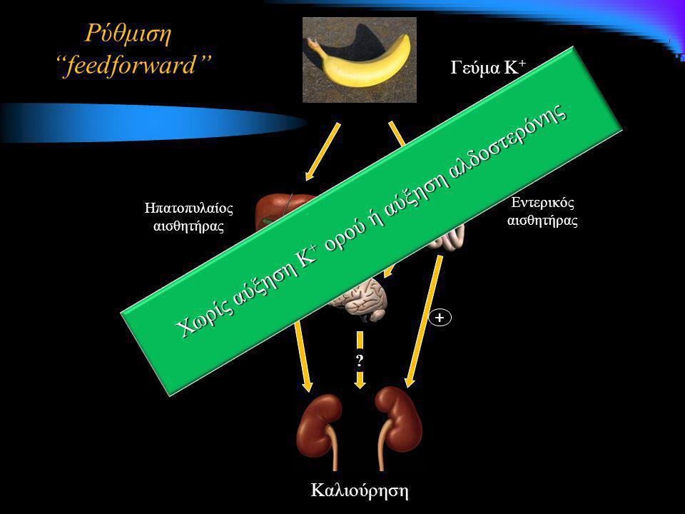 """Ρύθμιση """"feedforward"""" Γεύμα Κ + Καλιούρηση Ηπατοπυλαίος αισθητήρας Εντερικός αισθητήρας + ++ + Χωρίς αύξηση Κ + ορού ή αύξηση αλδοστερόνης ?"""
