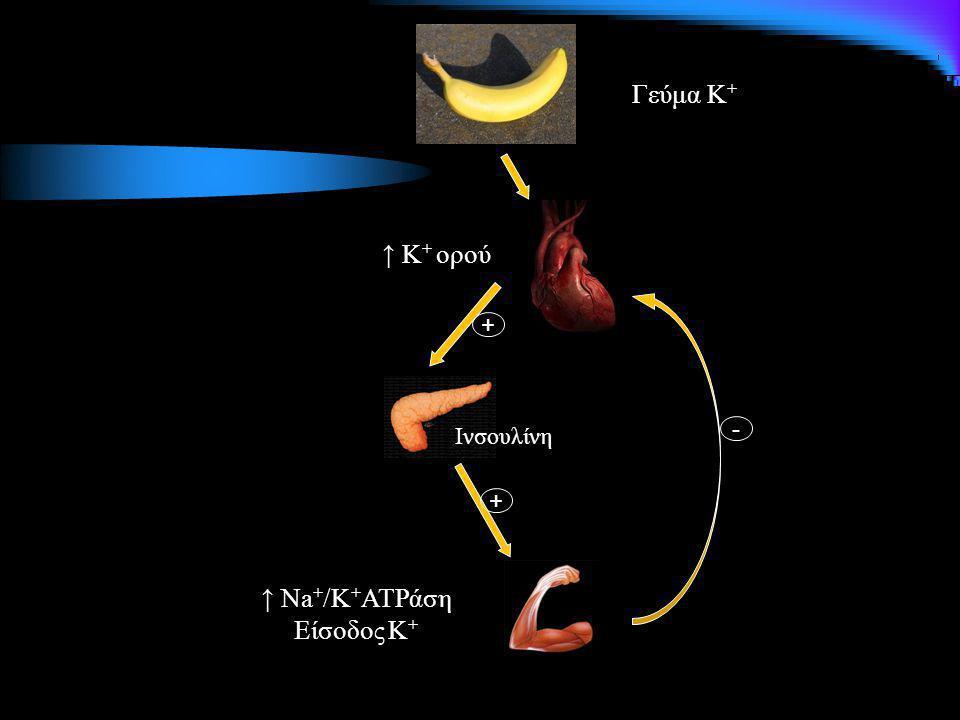 Γεύμα Κ + ↑ Κ + ορού + Ινσουλίνη + - ↑ Na + /K + ATPάση Είσοδος Κ +