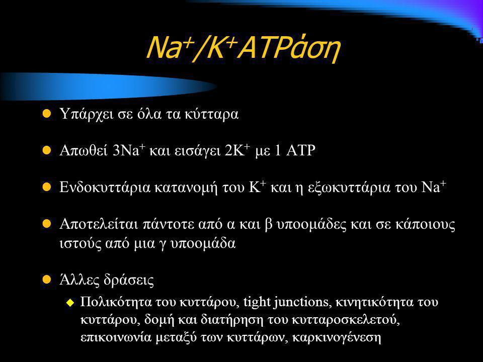 Na + /K + ATPάση Υπάρχει σε όλα τα κύτταρα Απωθεί 3Na + και εισάγει 2Κ + με 1 ATP Ενδοκυττάρια κατανομή του Κ + και η εξωκυττάρια του Na + Αποτελείται