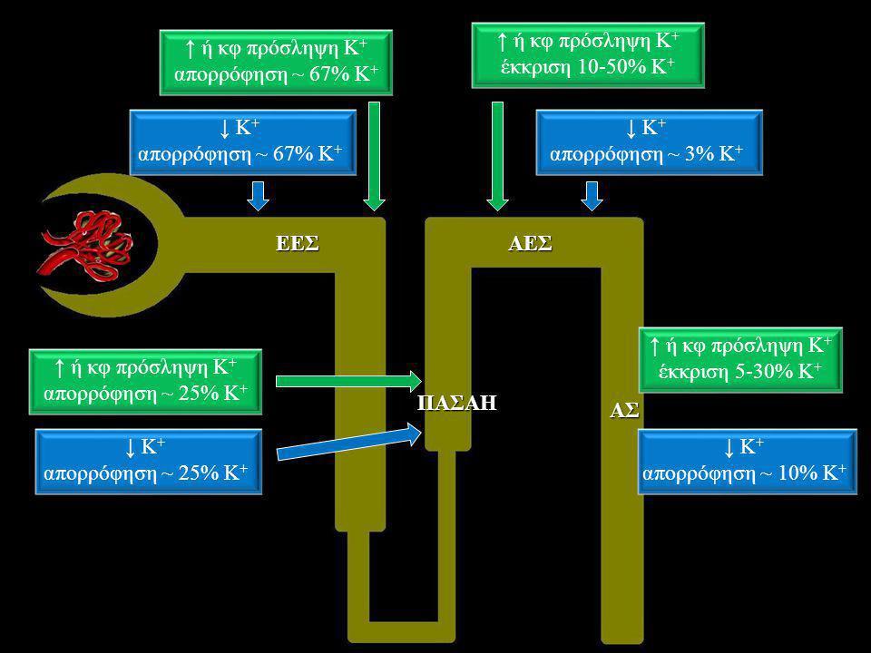 ↑ ή κφ πρόσληψη Κ + απορρόφηση ~ 67% Κ + ↓ Κ + απορρόφηση ~ 67% Κ +ΕΕΣ ↑ ή κφ πρόσληψη Κ + απορρόφηση ~ 25% Κ + ↓ Κ + απορρόφηση ~ 25% Κ + ↓ Κ + απορρ