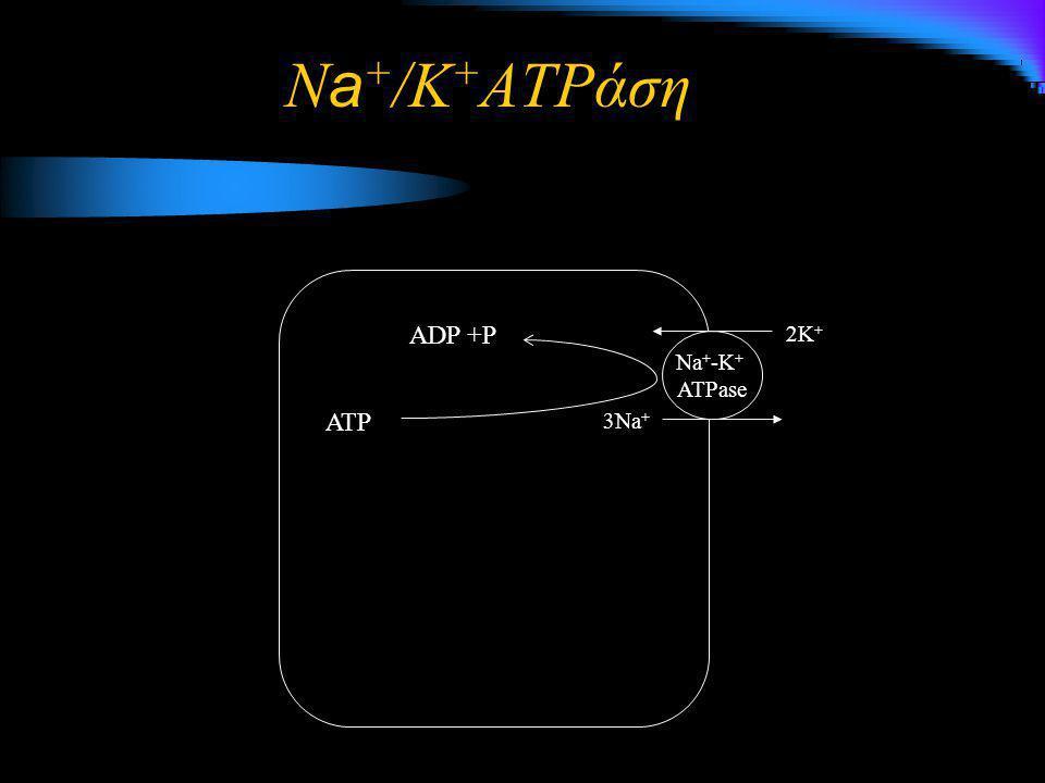 3Na + 2K + Na + -K + ATPase ATP ADP +P N a + /K + ATPάση