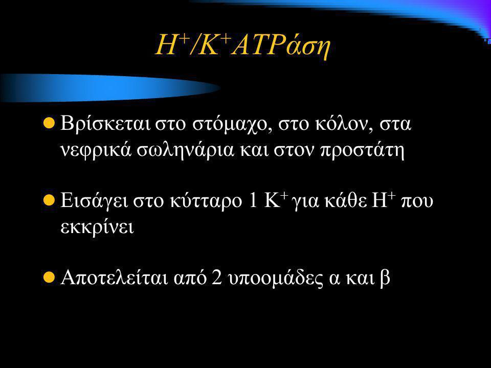 Η + /K + ATPάση Βρίσκεται στο στόμαχο, στο κόλον, στα νεφρικά σωληνάρια και στον προστάτη Εισάγει στο κύτταρο 1 Κ + για κάθε Η + που εκκρίνει Αποτελεί