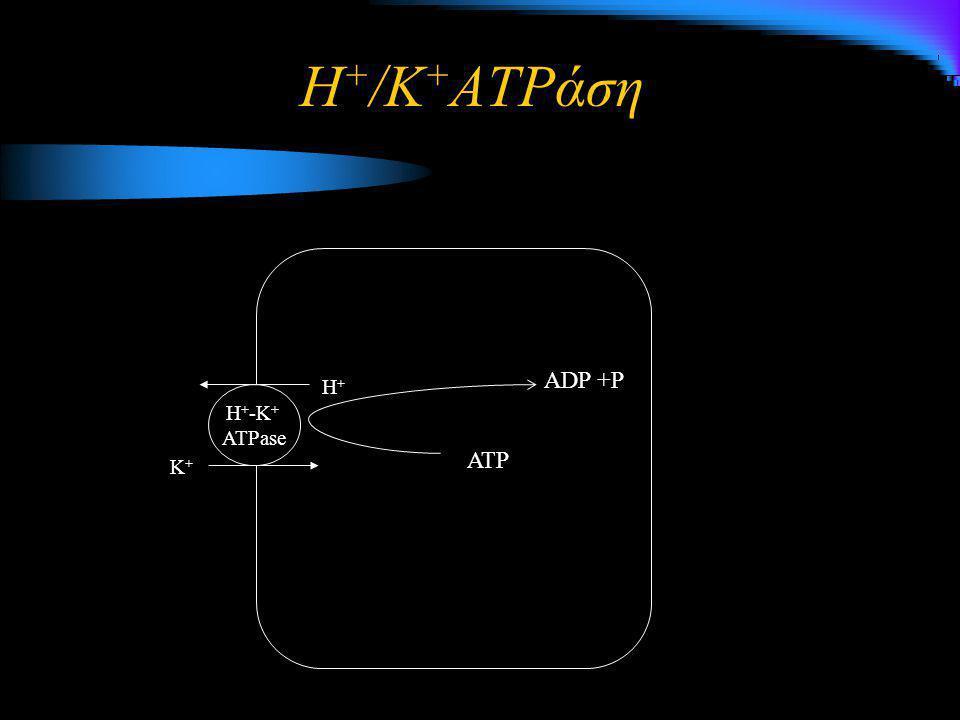K+K+K+K+ H+ H + -K + ATPase ATP ADP +P Η + /K + ATPάση
