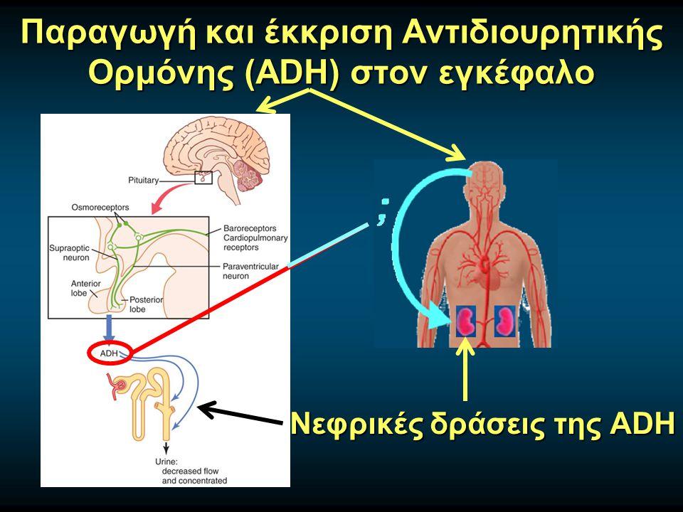 Παραγωγή και έκκριση Αντιδιουρητικής Oρμόνης (ADH) στον εγκέφαλο Νεφρικές δράσεις της ADH