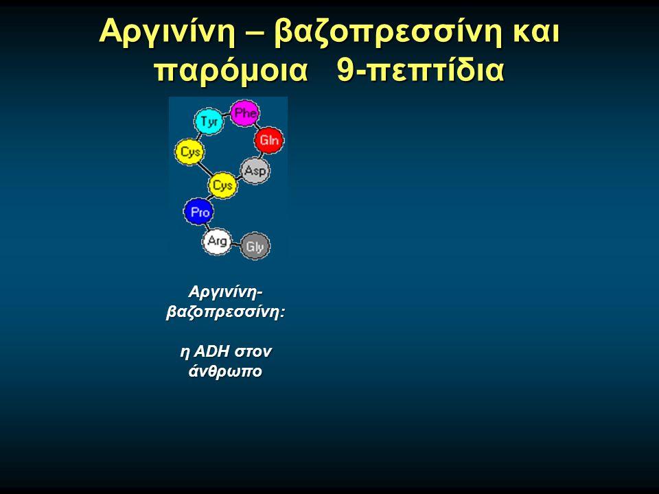 Αργινίνη – βαζοπρεσσίνη και παρόμοια 9-πεπτίδια Αργινίνη- βαζοπρεσσίνη: η ADH στον άνθρωπο