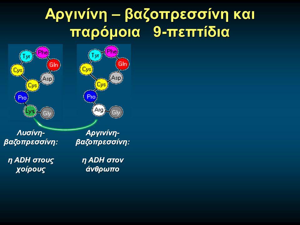 Αργινίνη – βαζοπρεσσίνη και παρόμοια 9-πεπτίδια Αργινίνη- βαζοπρεσσίνη: η ADH στον άνθρωπο Λυσίνη- βαζοπρεσσίνη: η ADH στους χοίρους