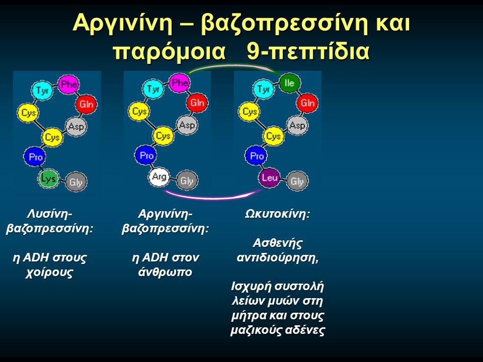 Αργινίνη – βαζοπρεσσίνη και παρόμοια 9-πεπτίδια Αργινίνη- βαζοπρεσσίνη: η ADH στον άνθρωπο Λυσίνη- βαζοπρεσσίνη: η ADH στους χοίρους Ωκυτοκίνη: Ασθενής αντιδιούρηση, Ισχυρή συστολή λείων μυών στη μήτρα και στους μαζικούς αδένες