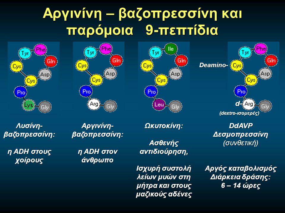Αργινίνη – βαζοπρεσσίνη και παρόμοια 9-πεπτίδια Deamino- d- (dextro-ισομερές) Αργινίνη- βαζοπρεσσίνη: η ADH στον άνθρωπο Λυσίνη- βαζοπρεσσίνη: η ADH στους χοίρους Ωκυτοκίνη: Ασθενής αντιδιούρηση, Ισχυρή συστολή λείων μυών στη μήτρα και στους μαζικούς αδένες DdAVPΔεσμοπρεσσίνη(συνθετική) Αργός καταβολισμός Διάρκεια δράσης: 6 – 14 ώρες