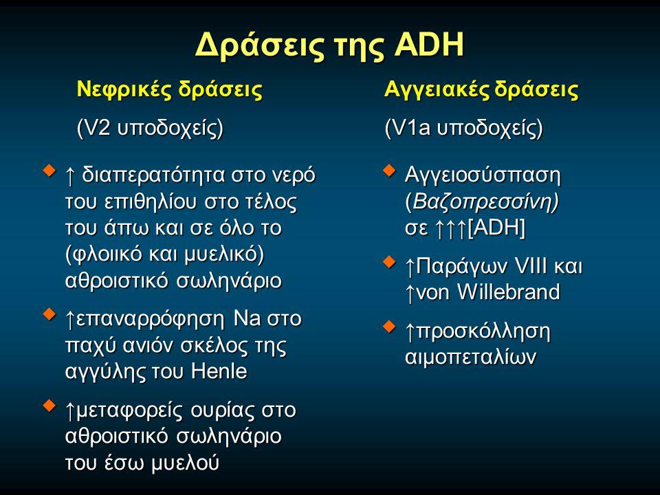 Δράσεις της ADH Νεφρικές δράσεις (V2 υποδοχείς)  ↑ διαπερατότητα στο νερό του επιθηλίου στο τέλος του άπω και σε όλο το (φλοιικό και μυελικό) αθροιστικό σωληνάριο  ↑επαναρρόφηση Na στο παχύ ανιόν σκέλος της αγγύλης του Henle  ↑μεταφορείς ουρίας στο αθροιστικό σωληνάριο του έσω μυελού Αγγειακές δράσεις (V1a υποδοχείς)  Αγγειοσύσπαση (Βαζοπρεσσίνη) σε ↑↑↑[ADH]  ↑Παράγων VIII και ↑von Willebrand  ↑προσκόλληση αιμοπεταλίων