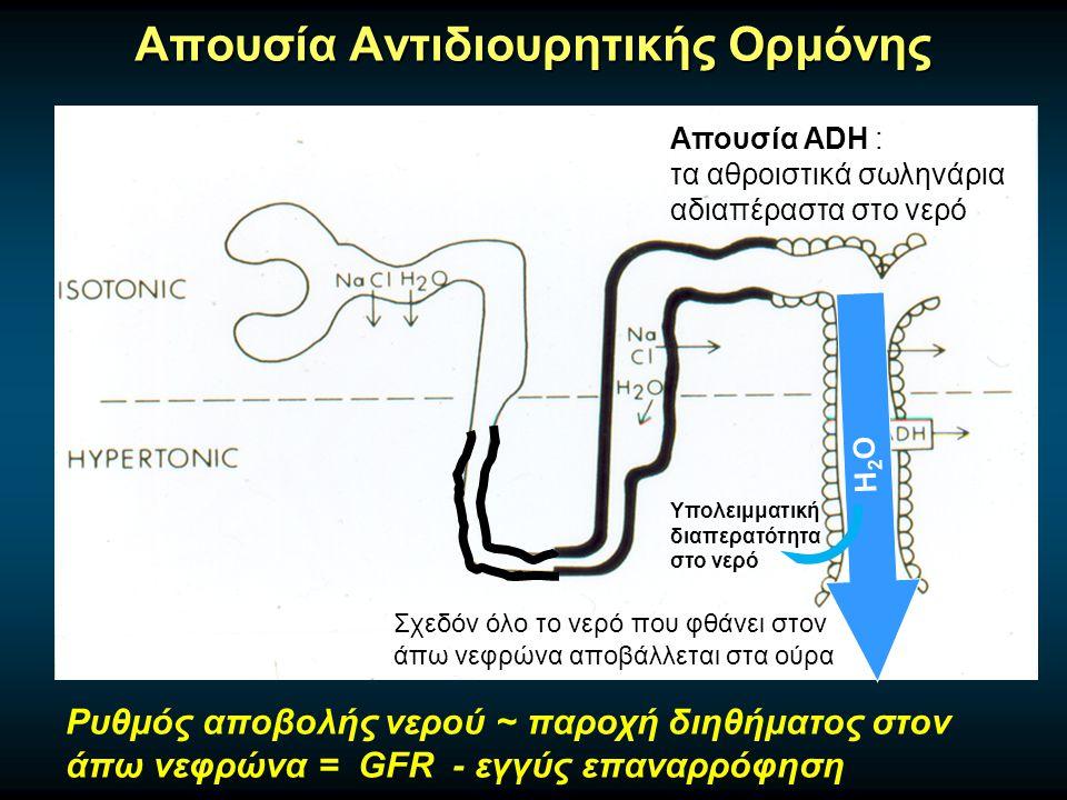 Απουσία Αντιδιουρητικής Ορμόνης Απουσία ADH : τα αθροιστικά σωληνάρια αδιαπέραστα στο νερό H2OH2O Υπολειμματική διαπερατότητα στο νερό Σχεδόν όλο το νερό που φθάνει στον άπω νεφρώνα αποβάλλεται στα ούρα Ρυθμός αποβολής νερού ~ παροχή διηθήματος στον άπω νεφρώνα = GFR - εγγύς επαναρρόφηση
