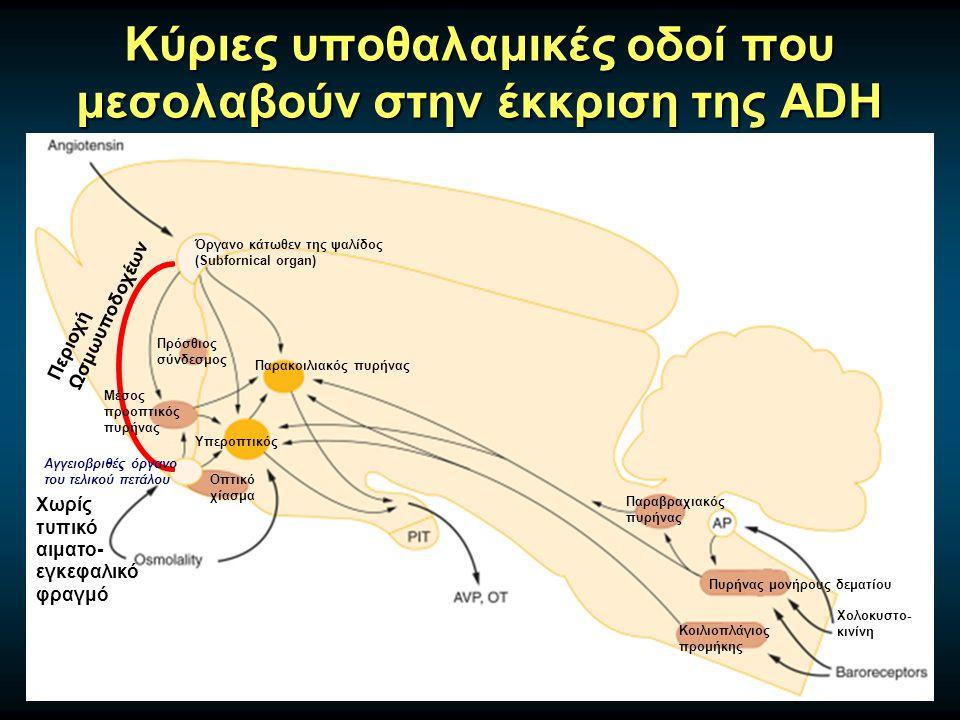 Κύριες υποθαλαμικές οδοί που μεσολαβούν στην έκκριση της ADH Υπεροπτικός Παρακοιλιακός πυρήνας Όργανο κάτωθεν της ψαλίδος (Subfornical organ) Οπτικό χίασμα Πυρήνας μονήρους δεματίου Κοιλιοπλάγιος προμήκης Παραβραχιακός πυρήνας Πρόσθιος σύνδεσμος Χολοκυστο- κινίνη Χωρίς τυπικό αιματο- εγκεφαλικό φραγμό Περιοχή Ωσμωυποδοχέων Αγγειοβριθές όργανο του τελικού πετάλου Μέσος προοπτικός πυρήνας