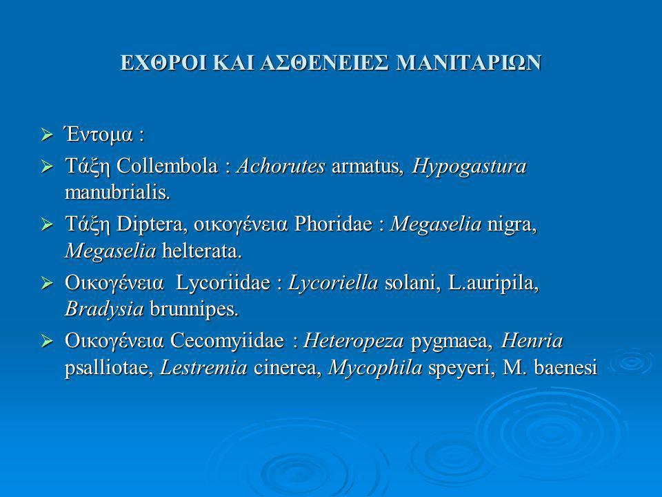 ΕΧΘΡΟΙ ΚΑΙ ΑΣΘΕΝΕΙΕΣ ΜΑΝΙΤΑΡΙΩΝ  Έντομα :  Τάξη Collembola : Achorutes armatus, Hypogastura manubrialis.  Τάξη Diptera, οικογένεια Phoridae : Megas