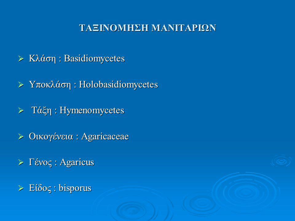 ΤΑΞΙΝΟΜΗΣΗ ΜΑΝΙΤΑΡΙΩΝ  Κλάση : Basidiomycetes  Υποκλάση : Holobasidiomycetes  Τάξη : Hymenomycetes  Οικογένεια : Agaricaceae  Γένος : Agaricus  Είδος : bisporus