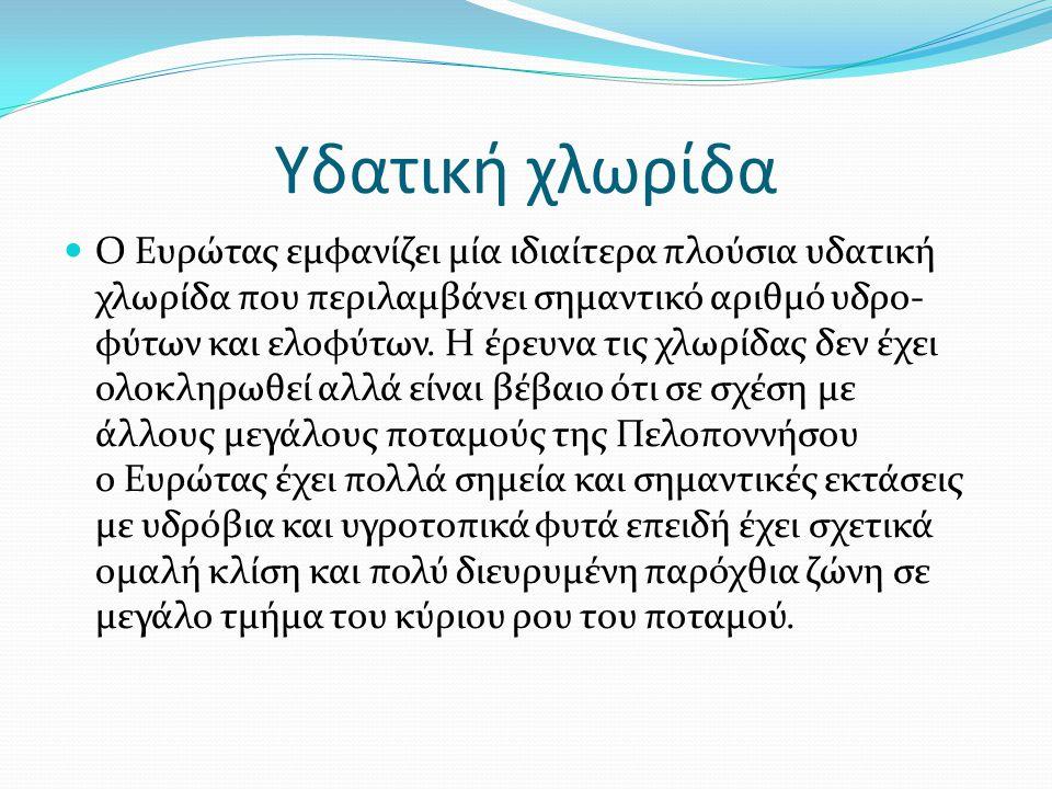 Υδατική χλωρίδα Ο Ευρώτας εμφανίζει μία ιδιαίτερα πλούσια υδατική χλωρίδα που περιλαμβάνει σημαντικό αριθμό υδρο- φύτων και ελοφύτων. Η έρευνα τις χλω