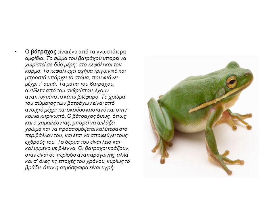 Ο βάτραχος είναι ένα από τα γνωστότερα αμφίβια. Το σώμα του βατράχου μπορεί να χωριστεί σε δύο μέρη: στο κεφάλι και τον κορμό. Το κεφάλι έχει σχήμα τρ