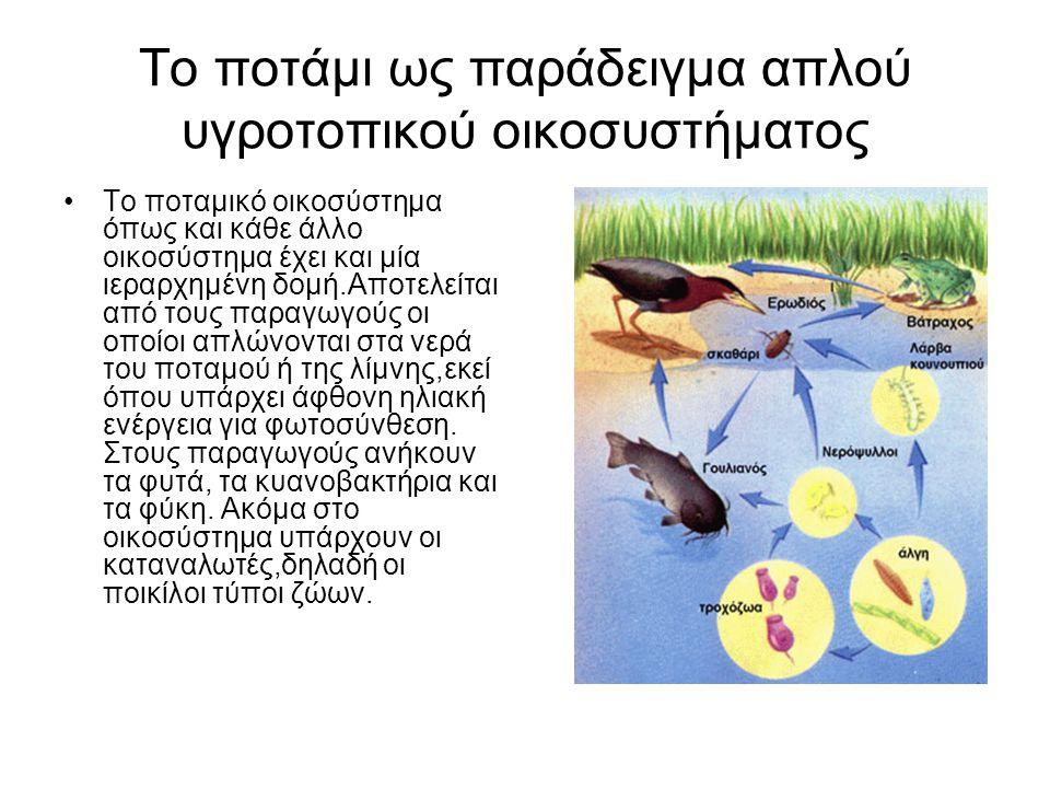 Το ποτάμι ως παράδειγμα απλού υγροτοπικού οικοσυστήματος Το ποταμικό οικοσύστημα όπως και κάθε άλλο οικοσύστημα έχει και μία ιεραρχημένη δομή.Αποτελεί