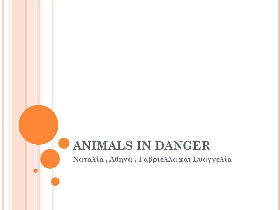 ANIMALS IN DANGER Ναταλία, Αθηνά, Γαβριέλλα και Ευαγγελία