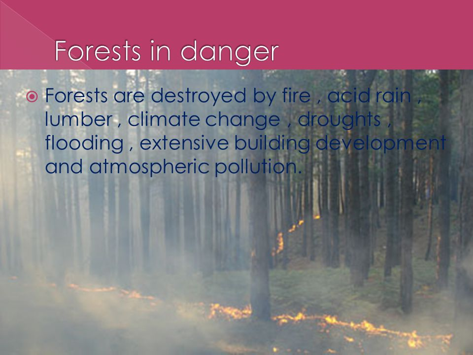  Forests are destroyed by fire, acid rain, lumber, climate change, droughts, flooding, extensive building development and atmospheric pollution.