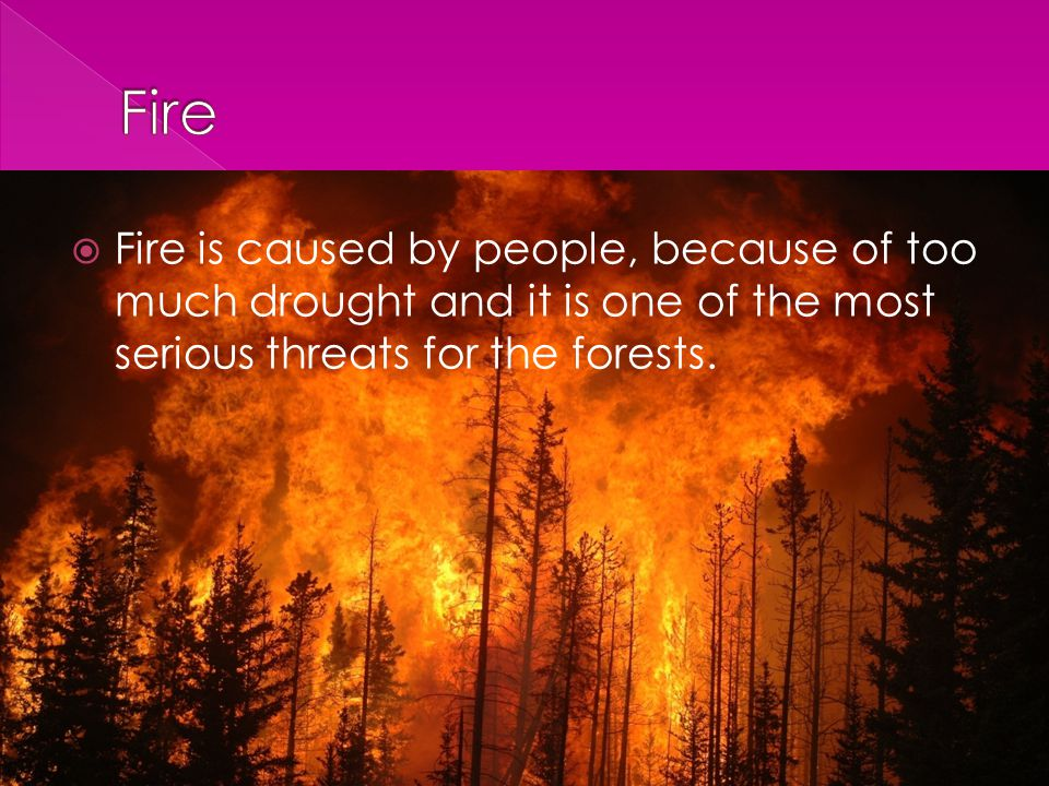  Fire is caused by people, because of too much drought and it is one of the most serious threats for the forests.