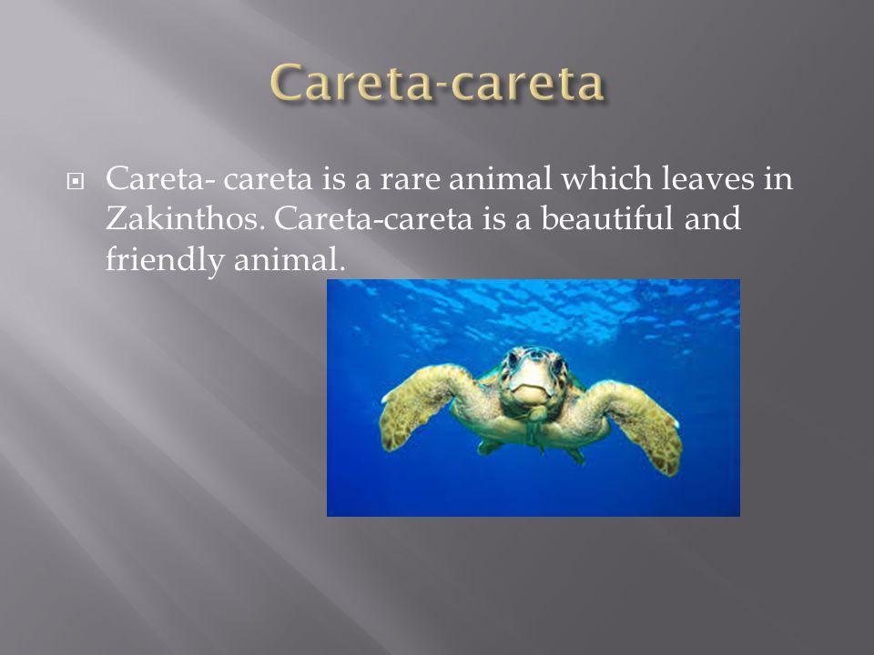  Careta- careta is a rare animal which leaves in Zakinthos.