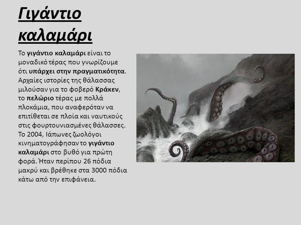 Γιγάντιο καλαμάρι Το γιγάντιο καλαμάρι είναι το μοναδικό τέρας που γνωρίζουμε ότι υπάρχει στην πραγματικότητα. Αρχαίες ιστορίες της θάλασσας μιλούσαν