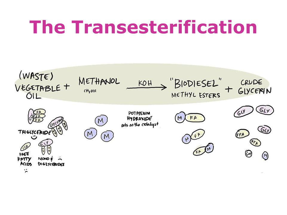The Transesterification