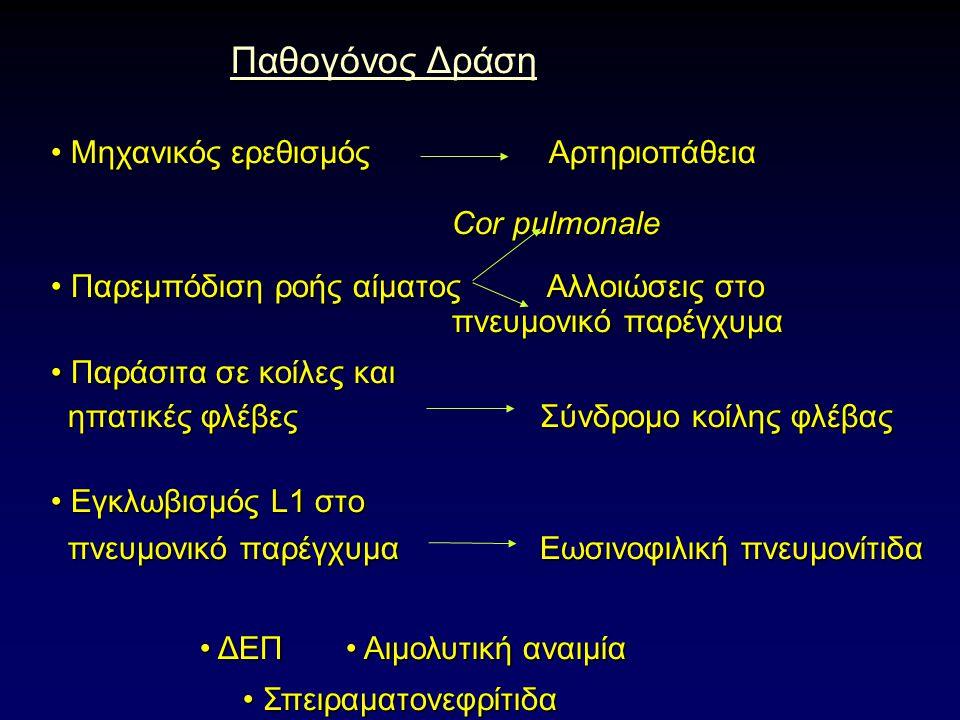 Παθογόνος Δράση Παθογόνος Δράση Μηχανικός ερεθισμός Αρτηριοπάθεια Μηχανικός ερεθισμός Αρτηριοπάθεια Cor pulmonale Cor pulmonale Παρεμπόδιση ροής αίματος Αλλοιώσεις στο Παρεμπόδιση ροής αίματος Αλλοιώσεις στο πνευμονικό παρέγχυμα πνευμονικό παρέγχυμα Παράσιτα σε κοίλες και Παράσιτα σε κοίλες και ηπατικές φλέβες Σύνδρομο κοίλης φλέβας ηπατικές φλέβες Σύνδρομο κοίλης φλέβας Εγκλωβισμός L1 στο Εγκλωβισμός L1 στο πνευμονικό παρέγχυμα Εωσινοφιλική πνευμονίτιδα πνευμονικό παρέγχυμα Εωσινοφιλική πνευμονίτιδα ΔΕΠ Αιμολυτική αναιμία ΔΕΠ Αιμολυτική αναιμία Σπειραματονεφρίτιδα Σπειραματονεφρίτιδα