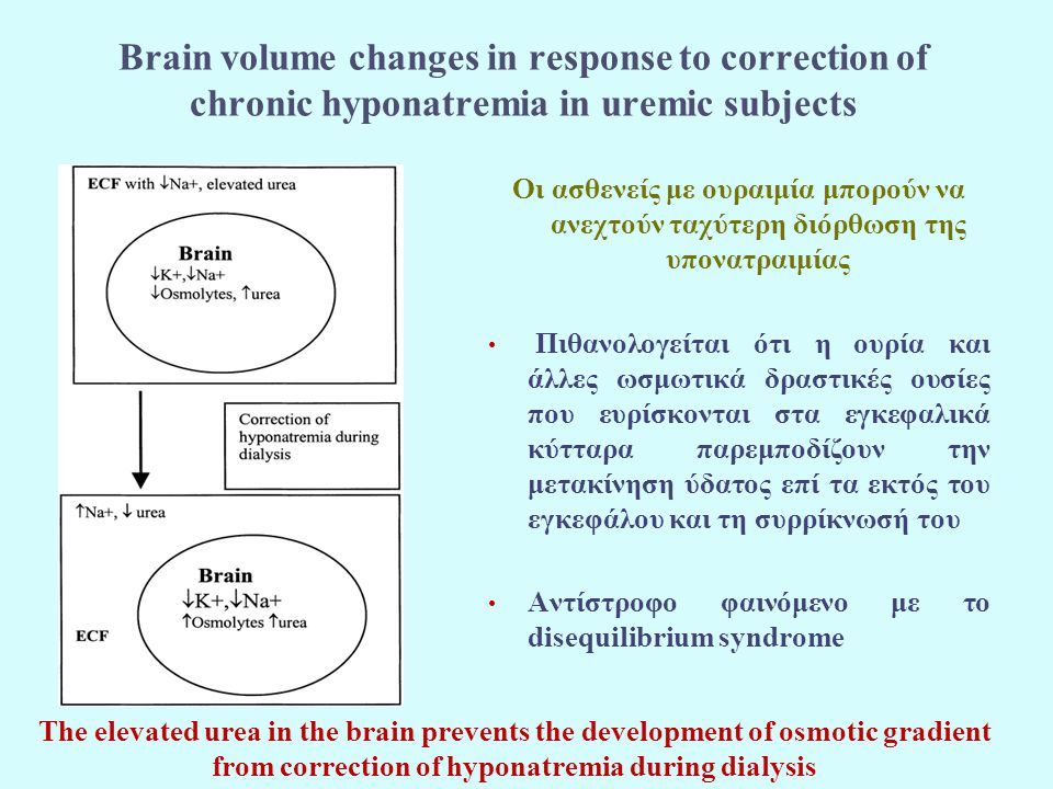 Brain volume changes in response to correction of chronic hyponatremia in uremic subjects Οι ασθενείς με ουραιμία μπορούν να ανεχτούν ταχύτερη διόρθωση της υπονατραιμίας Πιθανολογείται ότι η ουρία και άλλες ωσμωτικά δραστικές ουσίες που ευρίσκονται στα εγκεφαλικά κύτταρα παρεμποδίζουν την μετακίνηση ύδατος επί τα εκτός του εγκεφάλου και τη συρρίκνωσή του Αντίστροφο φαινόμενο με το disequilibrium syndrome The elevated urea in the brain prevents the development of osmotic gradient from correction of hyponatremia during dialysis