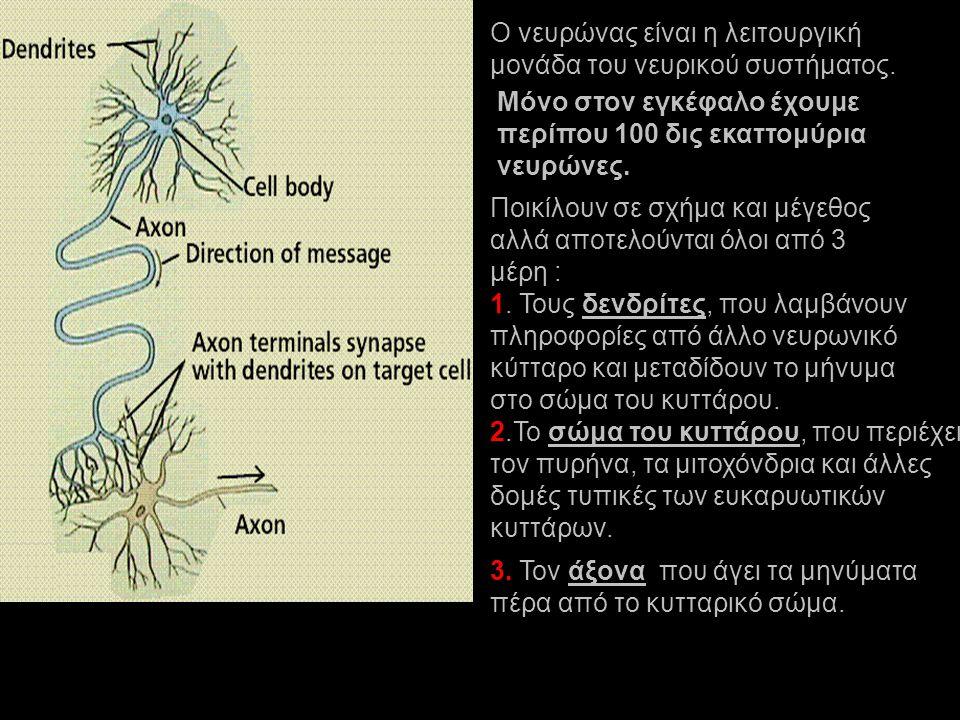 Ο νευρώνας είναι η λειτουργική μονάδα του νευρικού συστήματος. Μόνο στον εγκέφαλο έχουμε περίπου 100 δις εκαττομύρια νευρώνες. Ποικίλουν σε σχήμα και