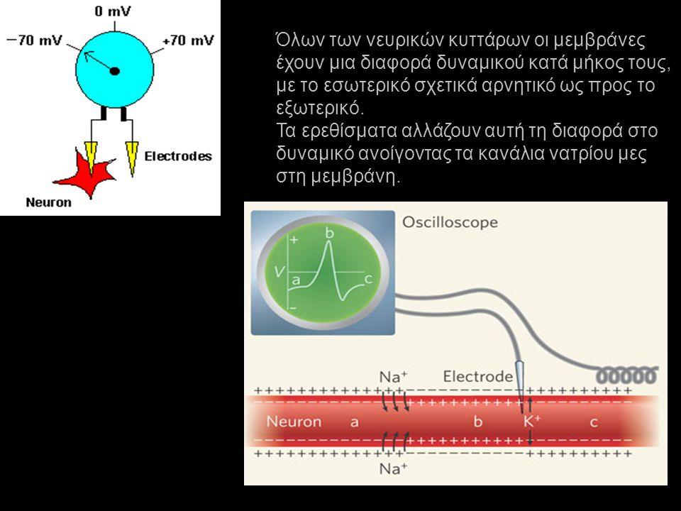 Όλων των νευρικών κυττάρων οι μεμβράνες έχουν μια διαφορά δυναμικού κατά μήκος τους, με το εσωτερικό σχετικά αρνητικό ως προς το εξωτερικό. Τα ερεθίσμ