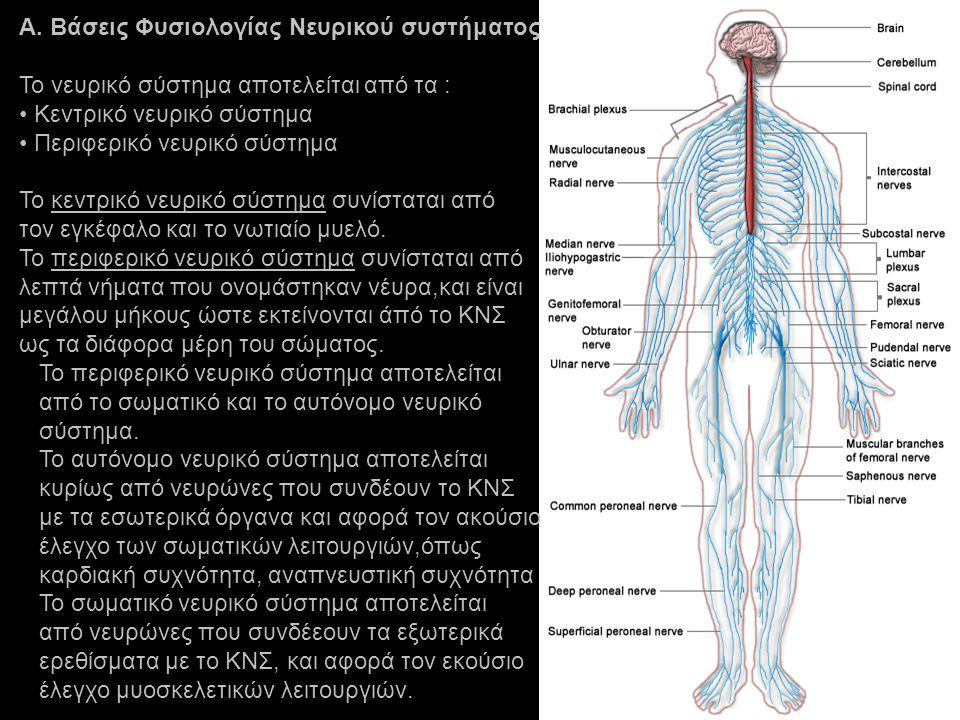Α. Βάσεις Φυσιολογίας Νευρικού συστήματος Το νευρικό σύστημα αποτελείται από τα : Kεντρικό νευρικό σύστημα Περιφερικό νευρικό σύστημα Το κεντρικό νευρ