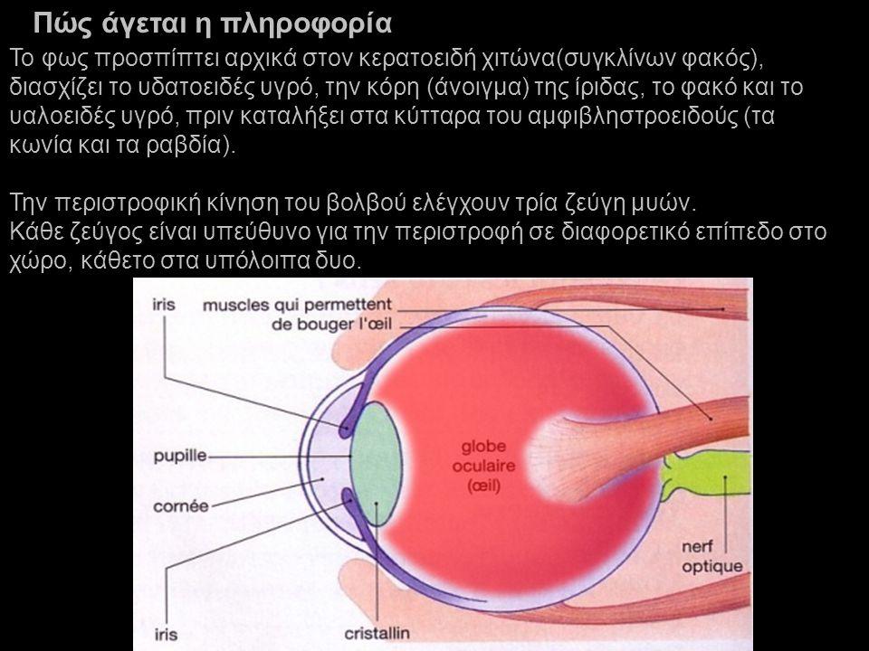 Το φως προσπίπτει αρχικά στον κερατοειδή χιτώνα(συγκλίνων φακός), διασχίζει το υδατοειδές υγρό, την κόρη (άνοιγμα) της ίριδας, το φακό και το υαλοειδές υγρό, πριν καταλήξει στα κύτταρα του αμφιβληστροειδούς (τα κωνία και τα ραβδία).