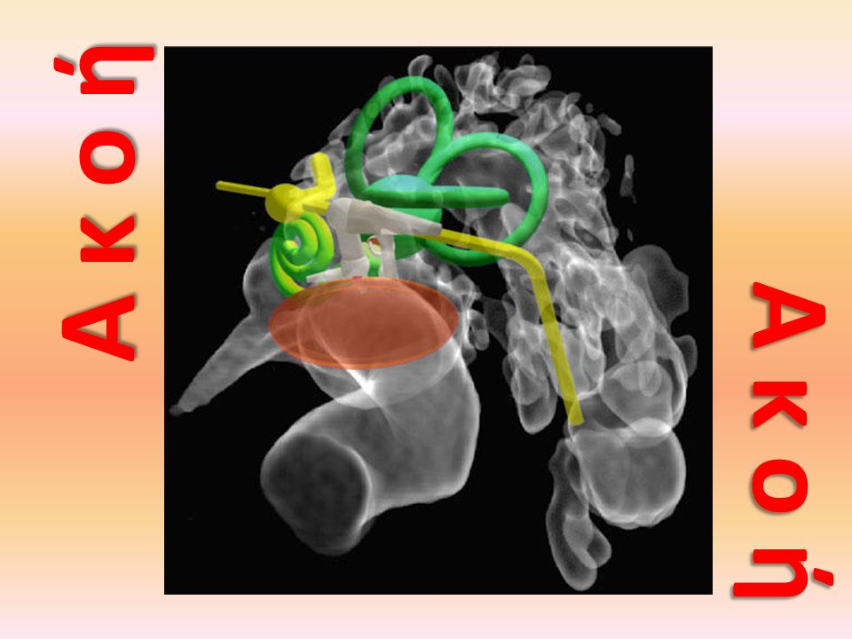 εξωτερικό αυτί μέσο αυτί εσωτερικό αυτί ακουστικά οστάρια τυμπανικός υμένας ευσταχιανή σάλπιγγα