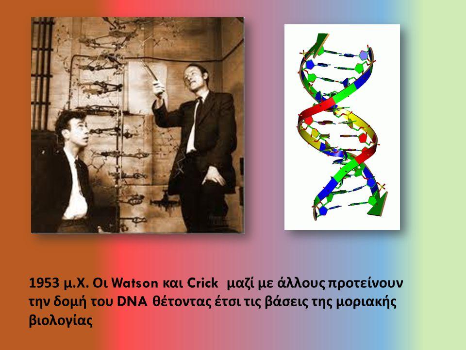 1953 μ. Χ. Οι Watson και Crick μαζί με άλλους προτείνουν την δομή του DNA θέτοντας έτσι τις βάσεις της μοριακής βιολογίας