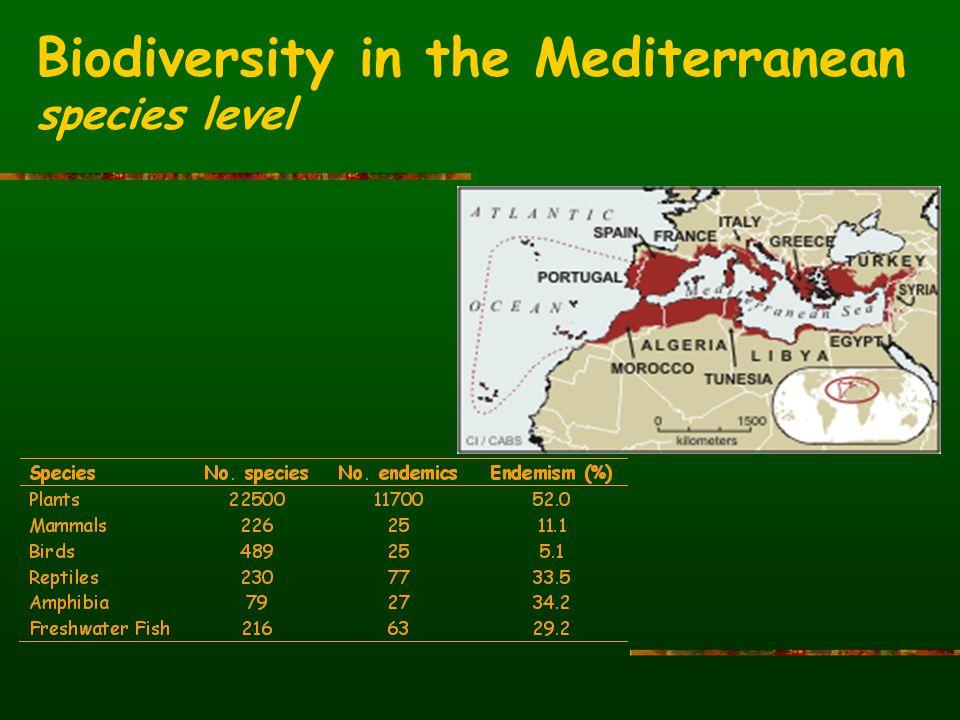 Biodiversity in the Mediterranean species level