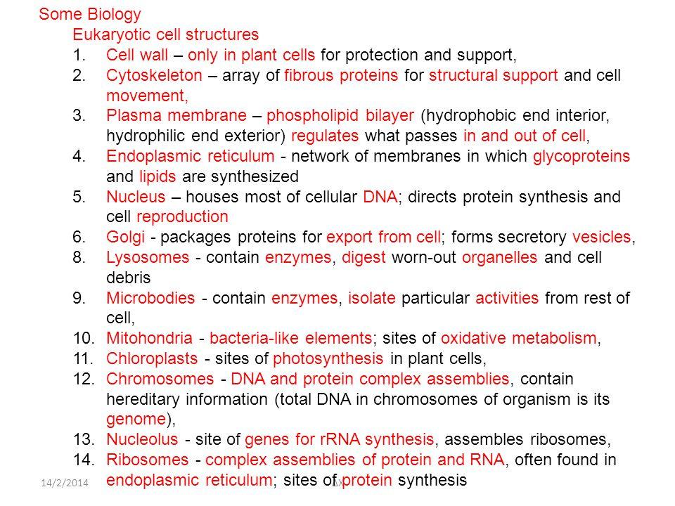 14/2/2014ΔΧ Some Biology Eukaryotic cell structures 1.Cell wall – only in plant cells for protection and support, 2.Cytoskeleton – array of fibrous proteins for structural support and cell movement, 3.Plasma membrane – phospholipid bilayer (hydrophobic end interior, hydrophilic end exterior) regulates what passes in and out of cell, 4.Endoplasmic reticulum - network of membranes in which glycoproteins and lipids are synthesized 5.Nucleus – houses most of cellular DNA; directs protein synthesis and cell reproduction 6.Golgi - packages proteins for export from cell; forms secretory vesicles, 8.Lysosomes - contain enzymes, digest worn-out organelles and cell debris 9.Microbodies - contain enzymes, isolate particular activities from rest of cell, 10.Mitohondria - bacteria-like elements; sites of oxidative metabolism, 11.Chloroplasts - sites of photosynthesis in plant cells, 12.Chromosomes - DNA and protein complex assemblies, contain hereditary information (total DNA in chromosomes of organism is its genome), 13.