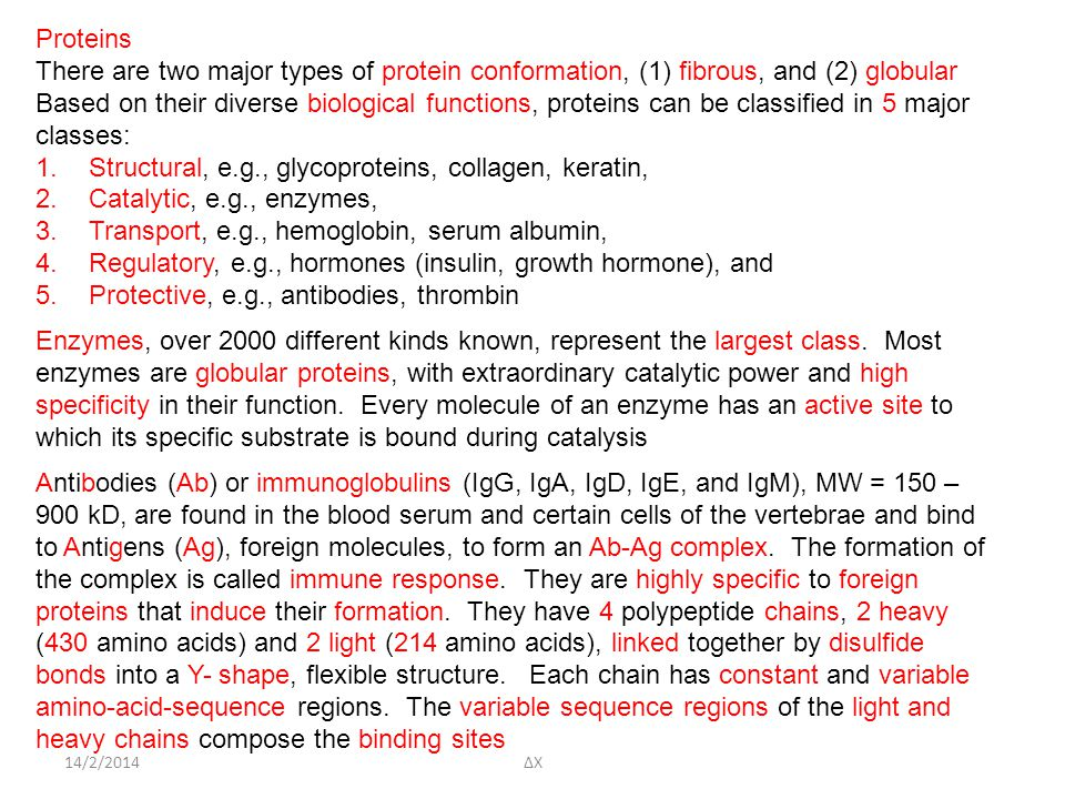 14/2/2014 Proteins There are two major types of protein conformation, (1) fibrous, and (2) globular Based on their diverse biological functions, prote