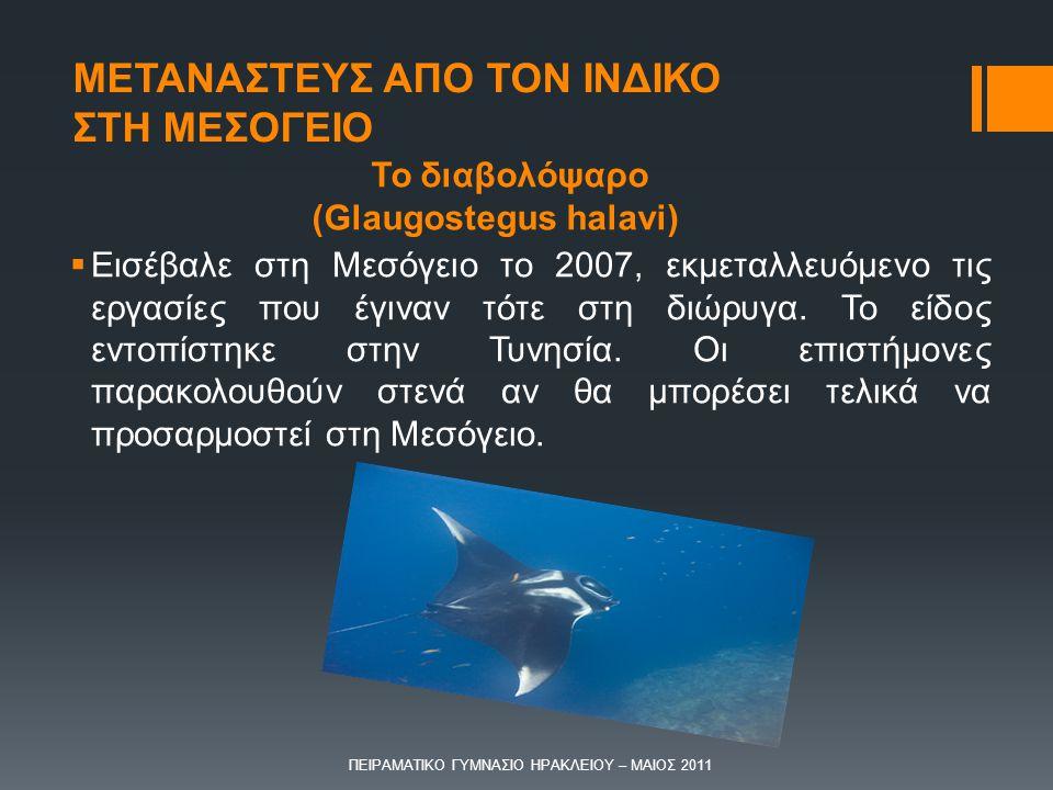 Το διαβολόψαρο (Glaugostegus halavi)  Εισέβαλε στη Μεσόγειο το 2007, εκμεταλλευόμενο τις εργασίες που έγιναν τότε στη διώρυγα. Το είδος εντοπίστηκε σ