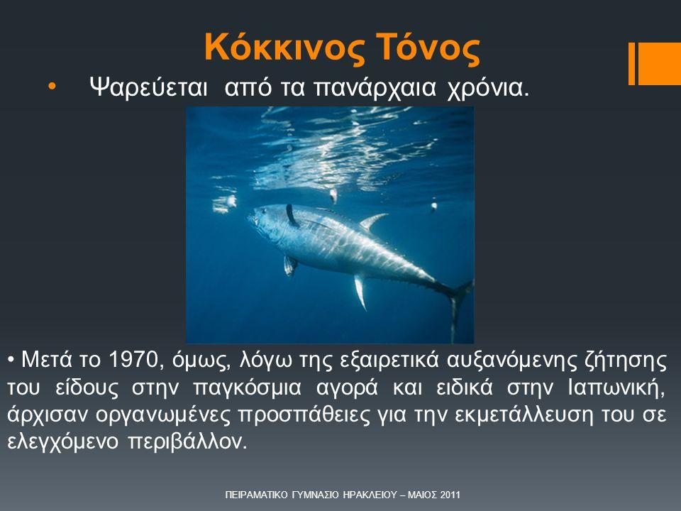 Ψαρεύεται από τα πανάρχαια χρόνια. Μετά το 1970, όμως, λόγω της εξαιρετικά αυξανόμενης ζήτησης του είδους στην παγκόσμια αγορά και ειδικά στην Ιαπωνικ
