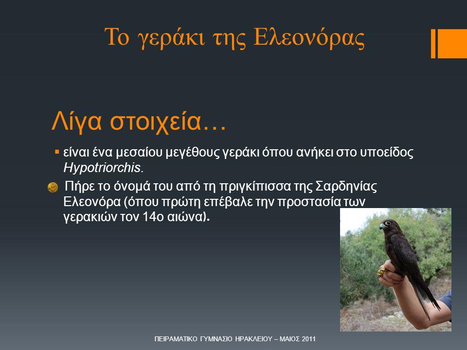 Λίγα στοιχεία…  είναι ένα μεσαίου μεγέθους γεράκι όπου ανήκει στο υποείδος Hypotriorchis. Πήρε το όνομά του από τη πριγκίπισσα της Σαρδηνίας Ελεονόρα
