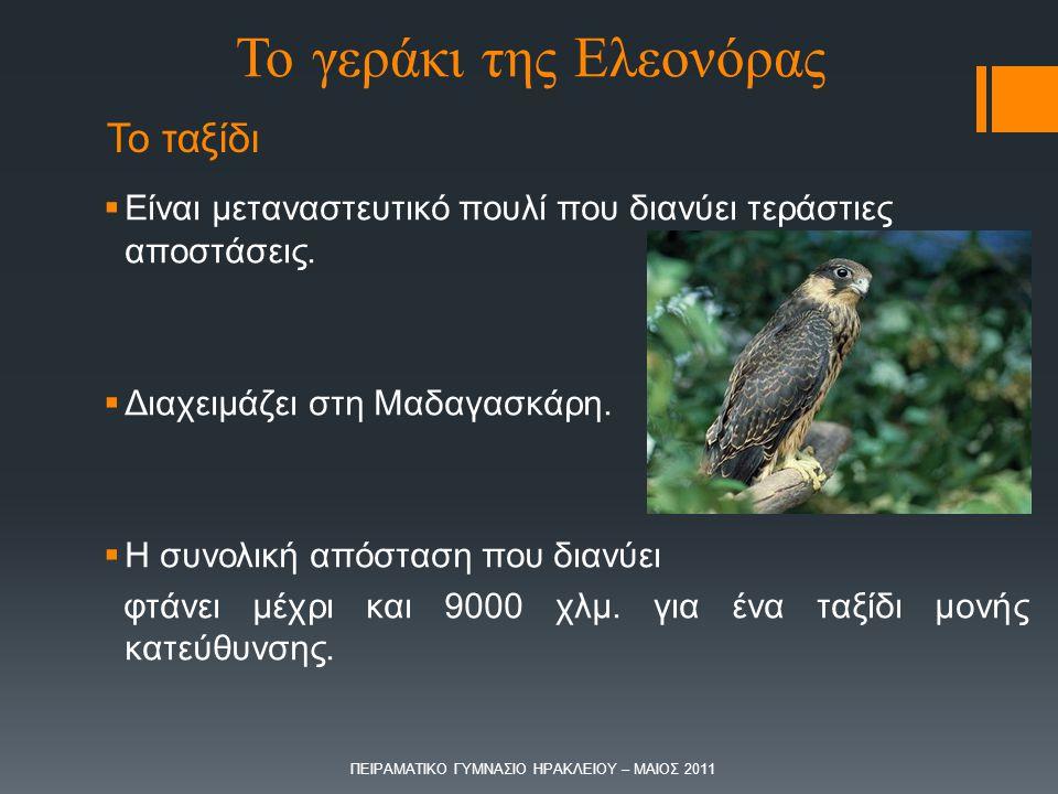 Το ταξίδι  Είναι μεταναστευτικό πουλί που διανύει τεράστιες αποστάσεις.  Διαχειμάζει στη Μαδαγασκάρη.  Η συνολική απόσταση που διανύει φτάνει μέχρι