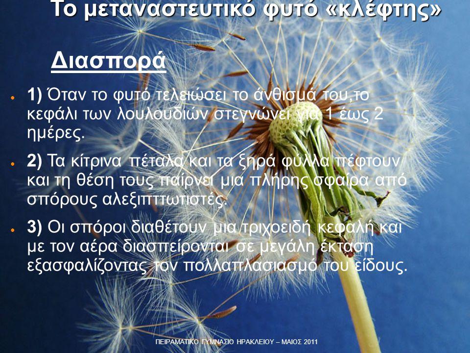 Διασπορά ● 1) Όταν το φυτό τελειώσει το άνθισμά του,το κεφάλι των λουλουδιών στεγνώνει για 1 έως 2 ημέρες. ● 2) Τα κίτρινα πέταλα και τα ξηρά φύλλα πέ