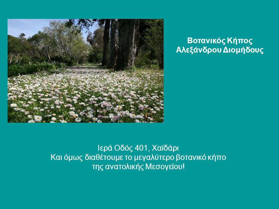 Βοτανικός Κήπος Αλεξάνδρου Διομήδους Ιερά Οδός 401, Χαϊδάρι Και όμως διαθέτουμε το μεγαλύτερο βοτανικό κήπο της ανατολικής Μεσογείου!